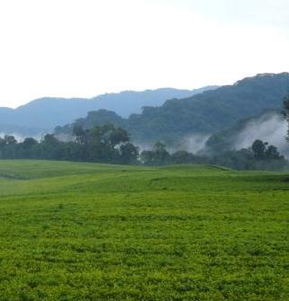 Impact Evaluation of Rwanda's Land Tenure Regularisation Programme