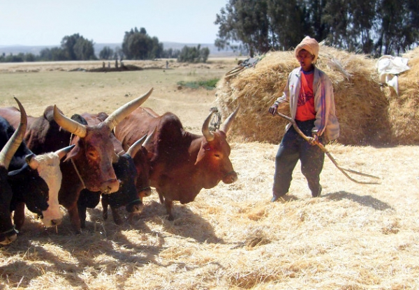 Researching Change and Continuity in Rural Ethiopia