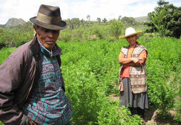 What future for agricultural extension